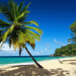 Calm beach with palm — Stock Photo #2118395