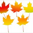 Royalty-Free Stock Vector Image: Autumn leafs set