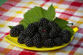 Plate of blackberries — Stock Photo