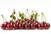 Cherry row — Stockfoto