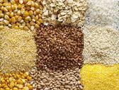девять видов зерновых на черную листовую макро снимок фона — Стоковое фото