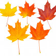 Stock Photo: Autumn leafs set (clipping path isolatio