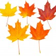 Autumn leafs set (clipping path isolatio — Stock Photo