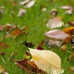 Autumn carpet — Stock Photo #1085422
