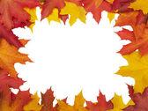 秋天的树叶框架 (剪切路径孤立无援 — 图库照片