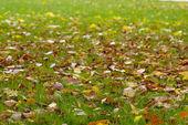Autumn carpet — Stock Photo