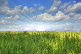 Green grass against the blue sky — Stock Photo