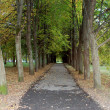Beautiful avenue in park — Stock Photo