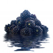 Royalty-Free Stock Photo: Blackberry on water