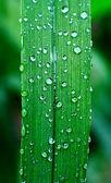 Plant leaf — Stock Photo