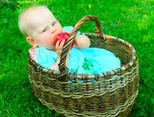 Baby girl in basket eating apple — Stock Photo
