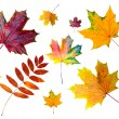 Autumn colored leaves - Stock Photo