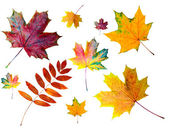 Autumn colored leaves — Stock Photo