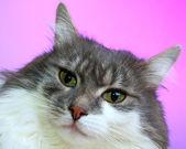 Cat — Stock Photo