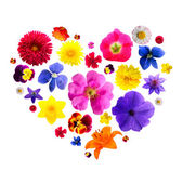 Heart from flowers — Stock Photo