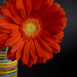 Red gerbera — Stock Photo #1040068