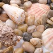 Stock Photo: Seshells and pebble