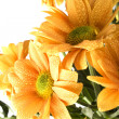 Boquet of orange flowers — Stock Photo #1040363