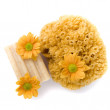 Natural sponge, soap and flowers — Stock Photo #1040370