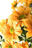 Boquet of orange flowers — Stock Photo