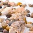 Sea shells — Stock Photo #1069758