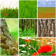 Stock Photo: Nature collection