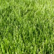 Green grass — Stockfoto #1072207