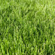 Green grass — Foto de stock #1072207