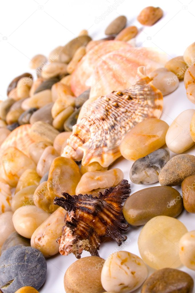 Sea shells and pebble beach collection — Stock Photo #1072566