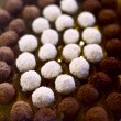 Chocolate truffles — Stock Photo #1920620