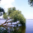 Tree in water — Stock Photo #1103764