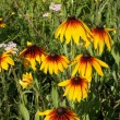 Flowers in a meadow in the evening sun - Stock Photo