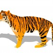Stock Vector: Tiger