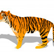 Vector de stock : Tiger