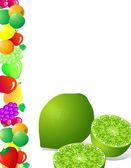 Lime fruit — Vector de stock