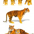Royalty-Free Stock Vector Image: Tigers
