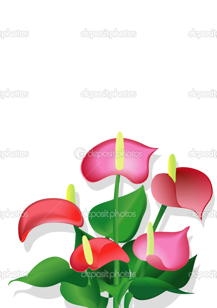 Bouquet of anthuriums  Stock Vector #1094599