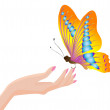Royalty-Free Stock Vector Image: Manual Butterfly