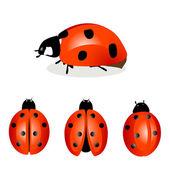 Ladybird — Stock Vector