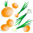 Stock Vector: Onion