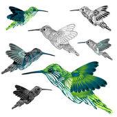 Hummingbird — Stockvektor