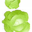 Cabbage — Stock Vector