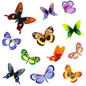 Illustration of butterflies of different — Stock Vector