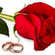 fleur une rose, deux anneaux de mariage — Photo
