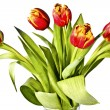 Bouquet of bright tulips on a white — Stockfoto