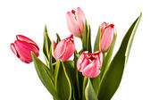 Bouquet of bright tulips on a white — Stock Photo