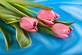 Bouquet of bright tulips — Stock Photo