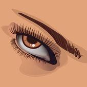 Human eye and eyebrow .Vector illustrati — Stock Vector