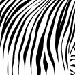 Royalty-Free Stock Vector Image: Black lines as at a zebra.Vector illustr