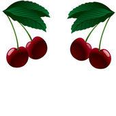 Four ripe cherries. Vector illustration — Stock Vector